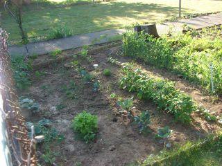 Pre-trip garden II